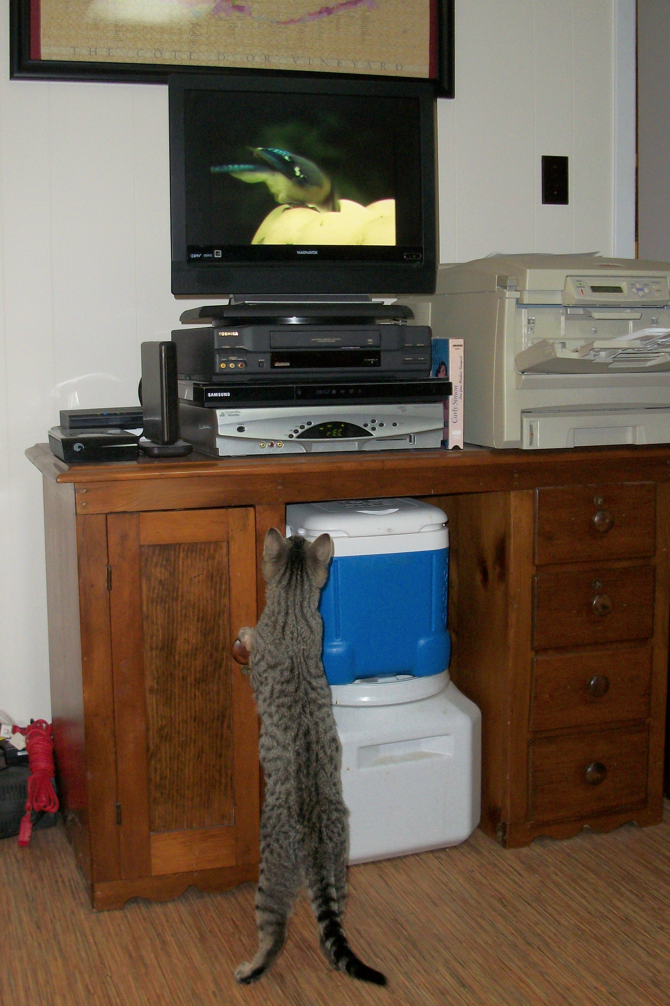 "Charlie watching ""Video Catnip"""