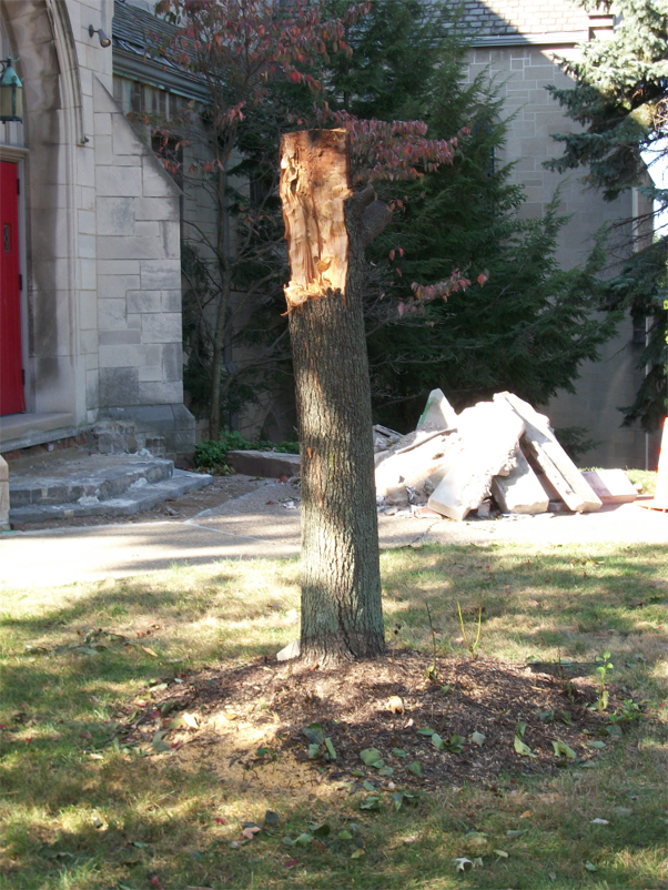 Remains of the tree