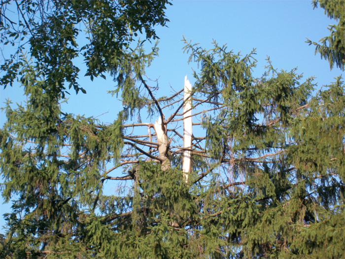 Missing treetops