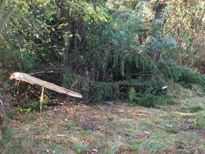 Downed tree limb